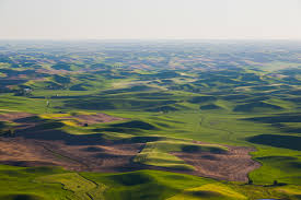 PALOUSE   The rolling hills of a very special ecosystem open up in front of you in tones of green and gold. The earthy scent of loam and grass rises to blend with notes of sweet honey and lily of the valley.
