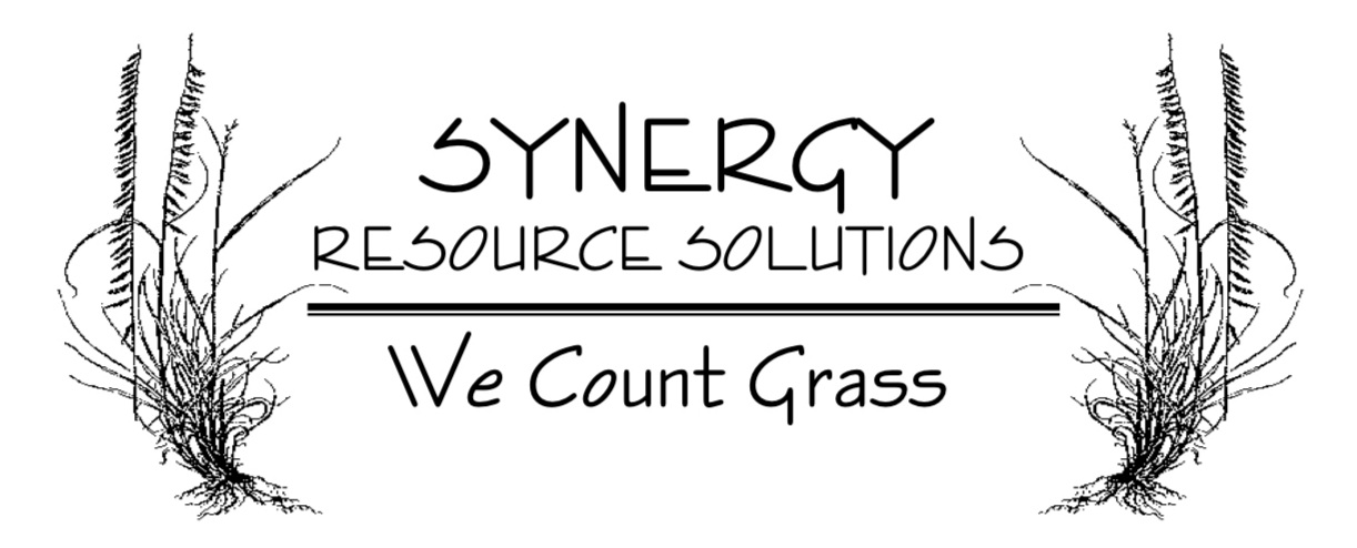 synergy+logo+no+oval.jpg