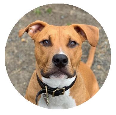 Follow Brewski     PBC's mascot pup! 🐕