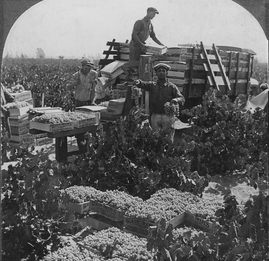 guasti-vineyard-picking-1920s.jpg
