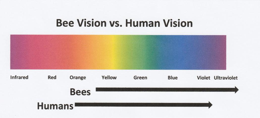 Source: Bee Culture
