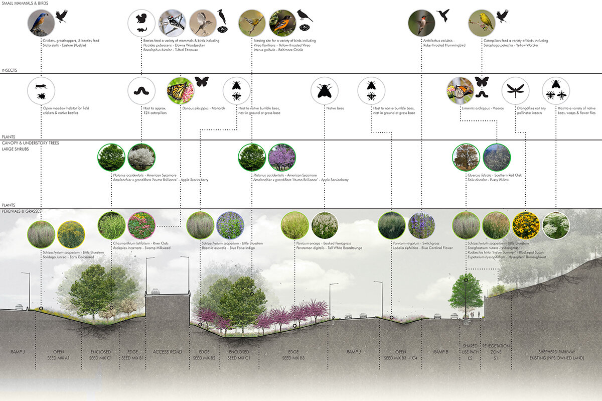 01-Access Road Ecotones-Section with Species.jpg
