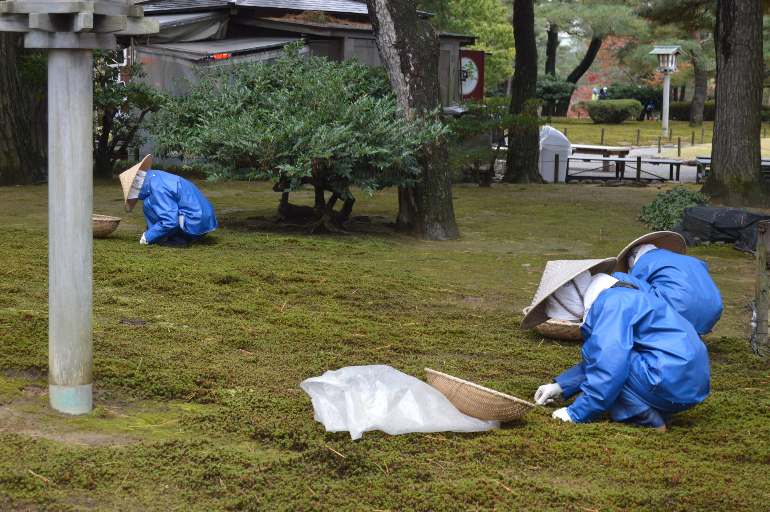 Three people cleaning part of a garden in the city of Kanazawa.