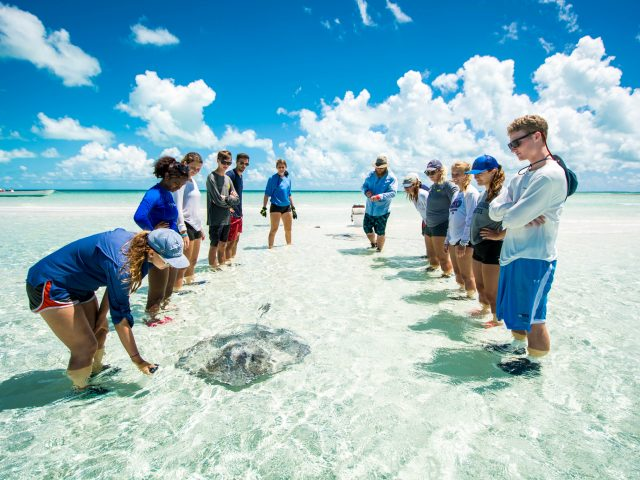 The Island School - Semester school in the Bahamas focused on marine studies!