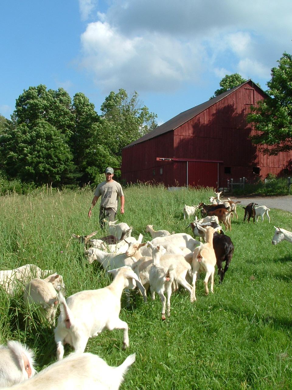 Pablo & Goats in Field2.JPG