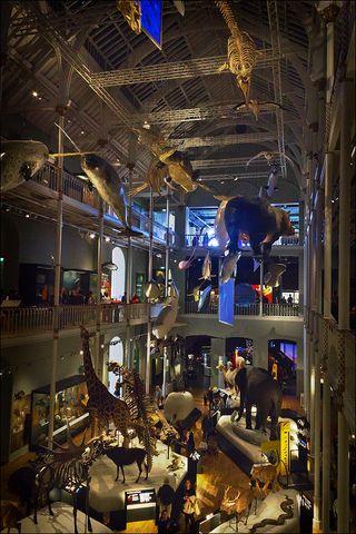 Edinburgh Natural History Museum.jpg