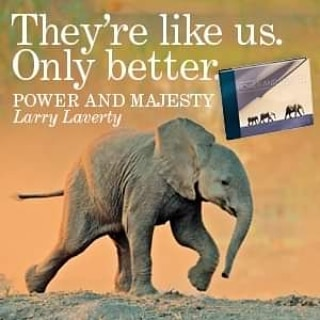 My book,  Power and Majesty,  has been out two days now.  My humble gratitude to all who have ordered one,  to all who care about the future for elephants.