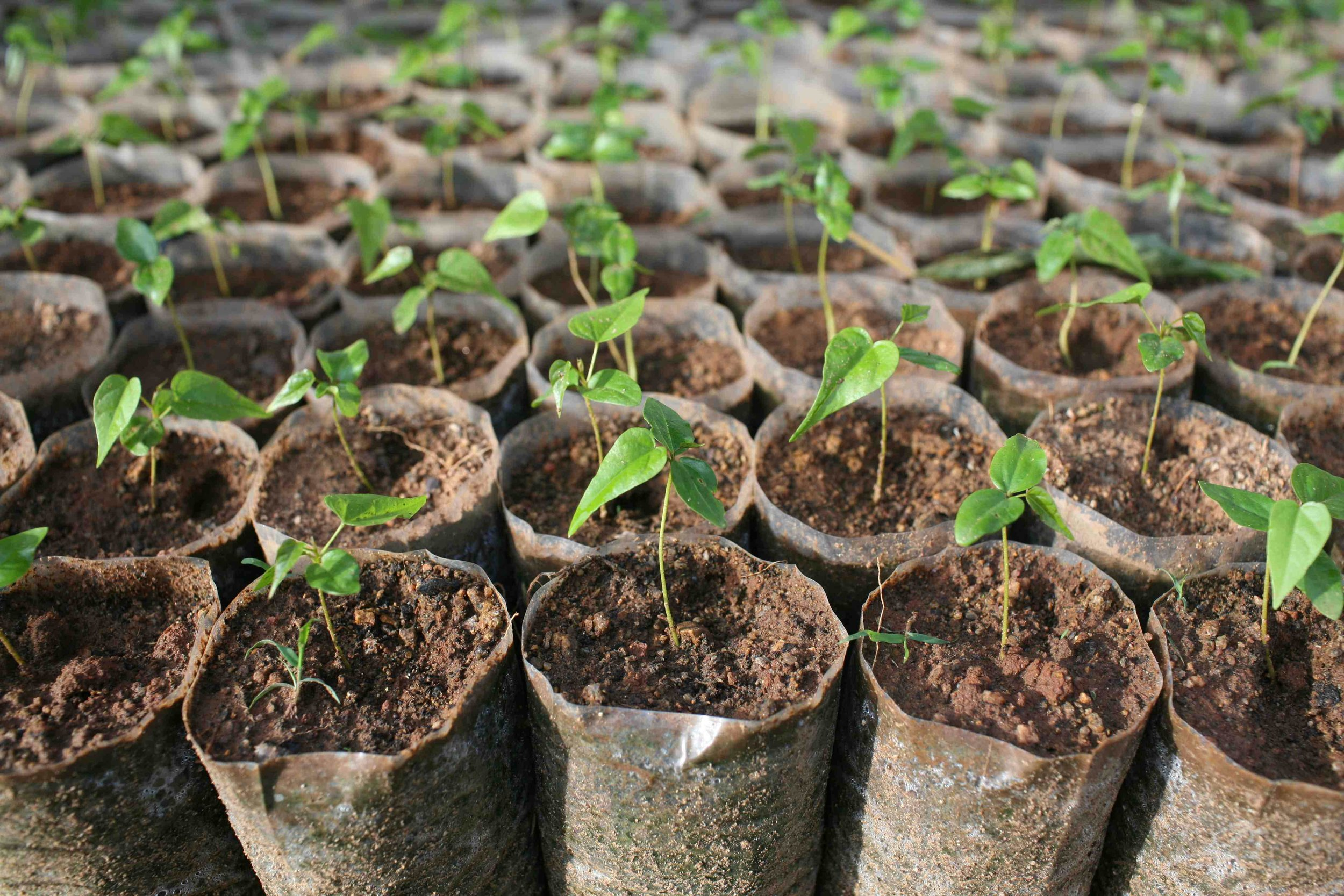 tree_nursery_sprouts_0310.jpg