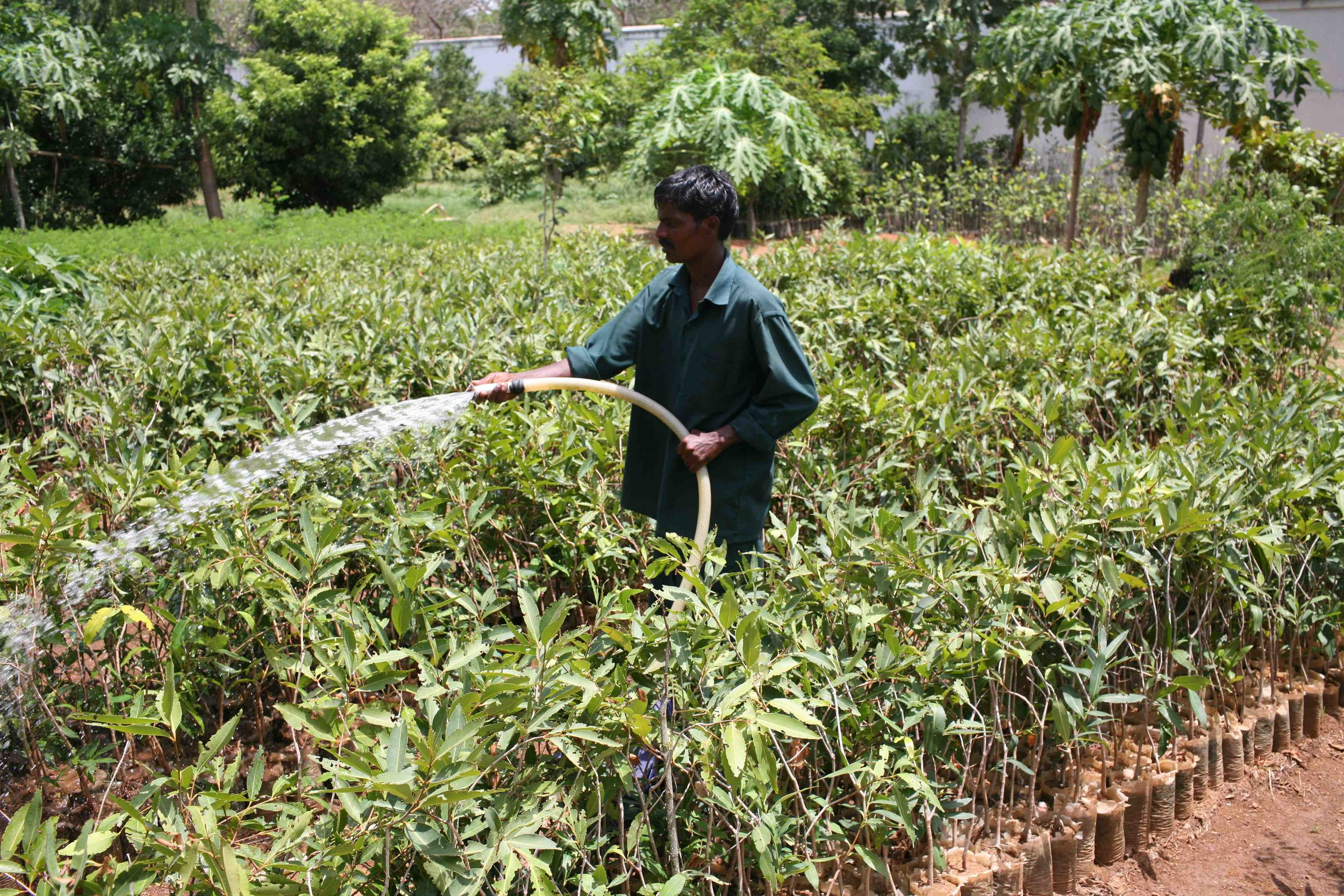 greensakthi_watering.jpg