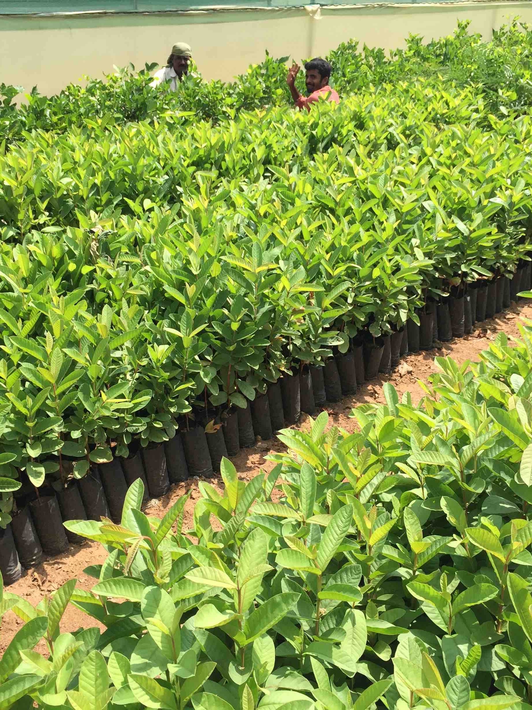 Green Sakthi Tree Nursery