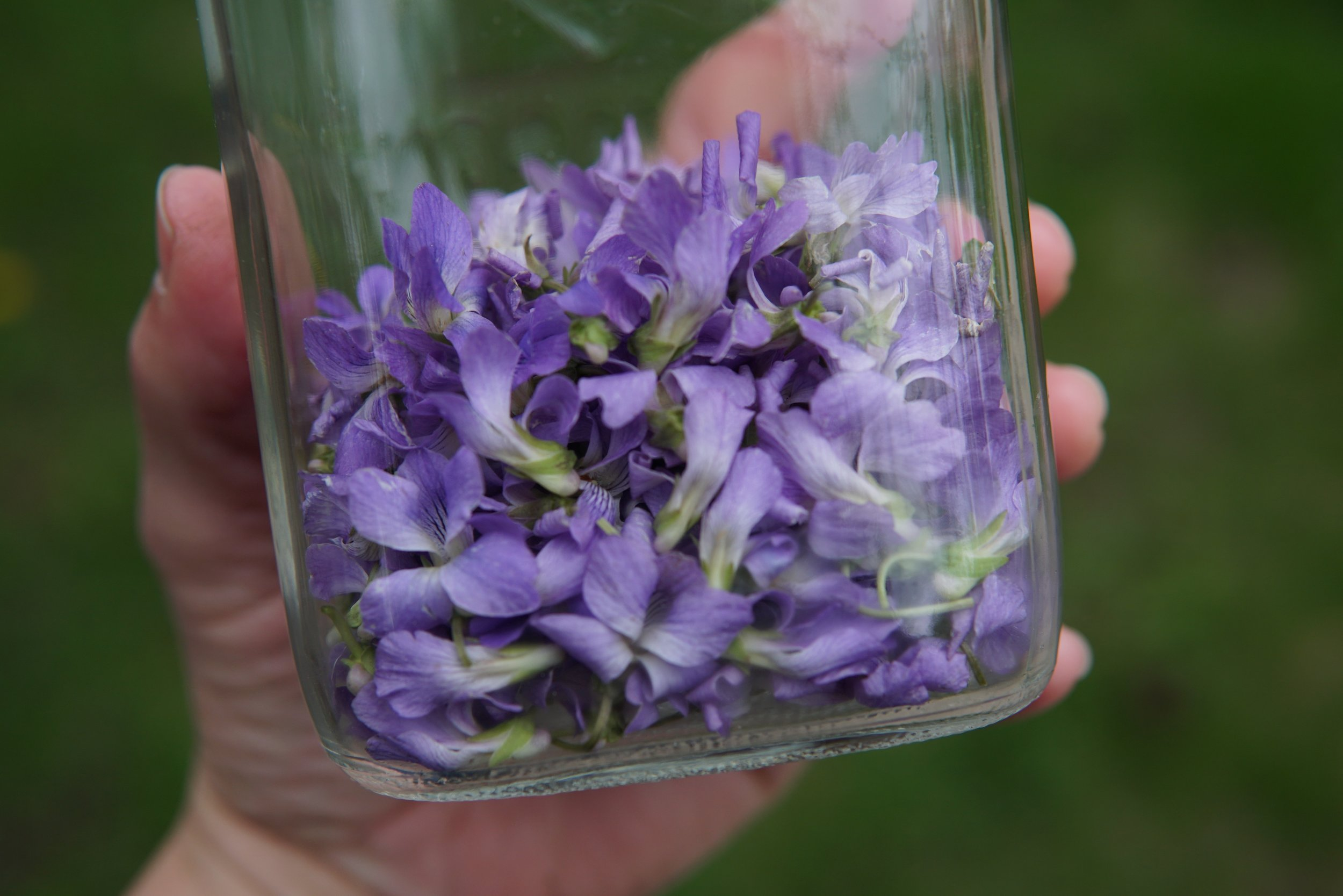 Violet flowers are cooling + soothing. They promote lymph flow + breast health.