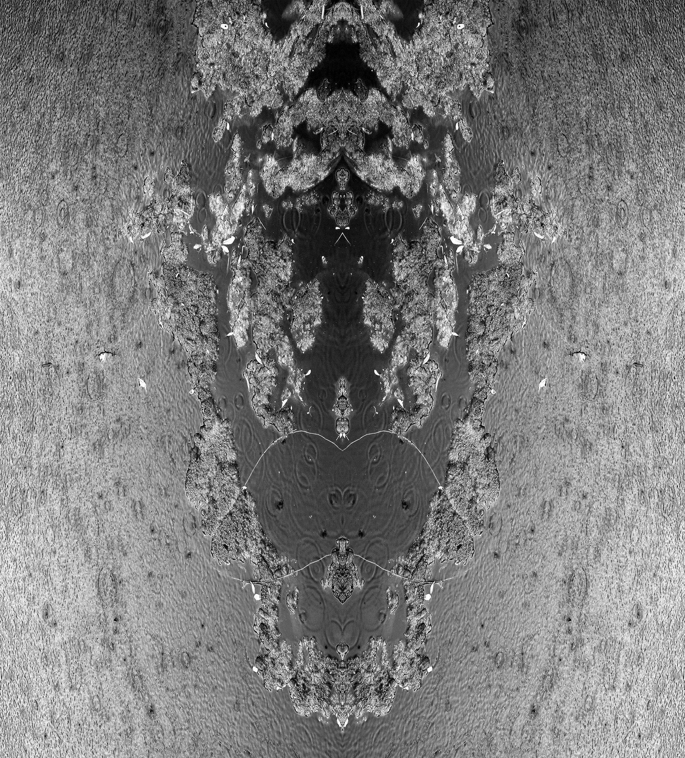 Paquet_HeadofMyFavoriteHorse_44x40_1400.jpg