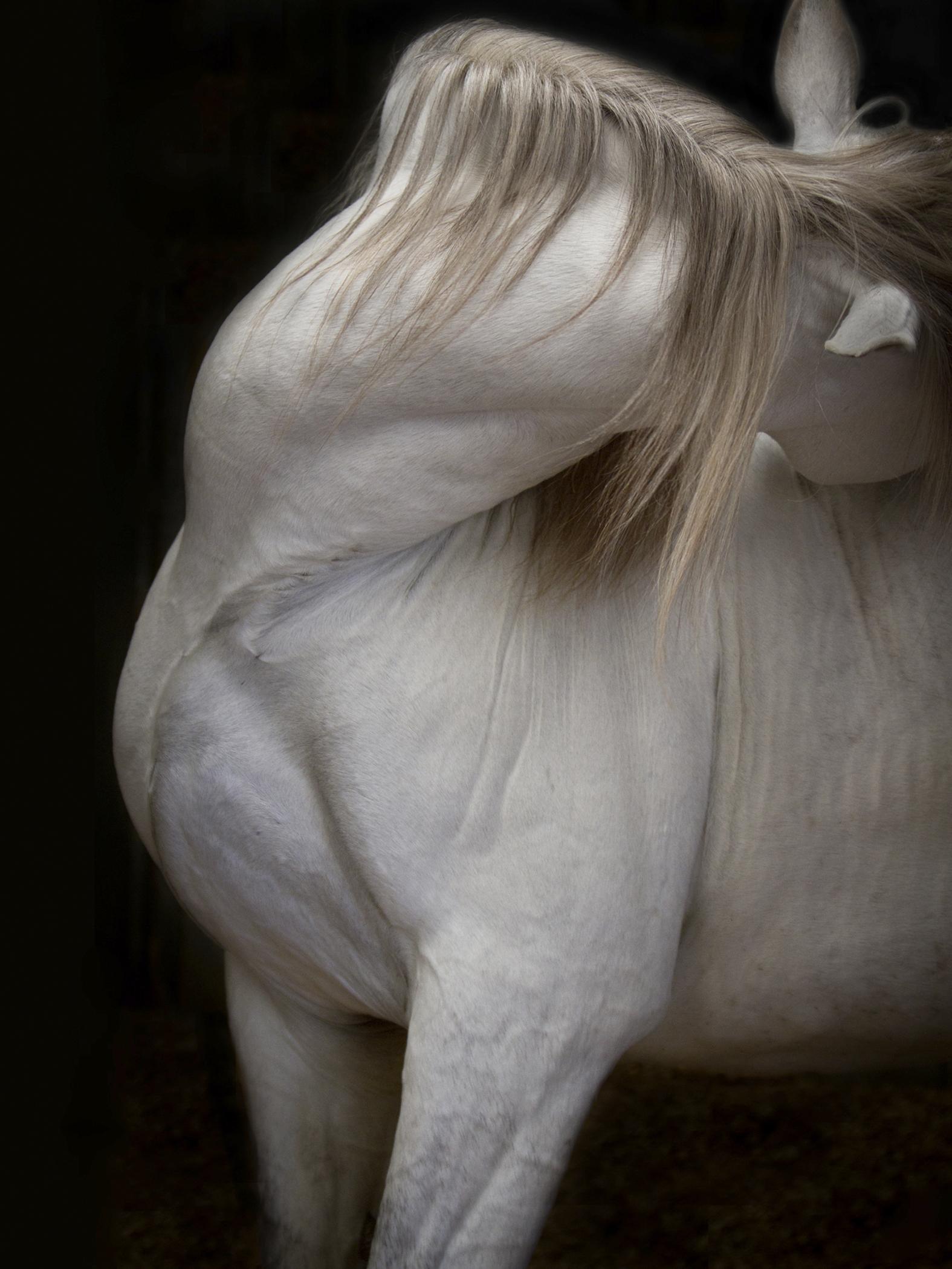 Friedman, 40 x 30, 2800 framed Photo Pegasus, 2015, 2-7.FSO .jpg