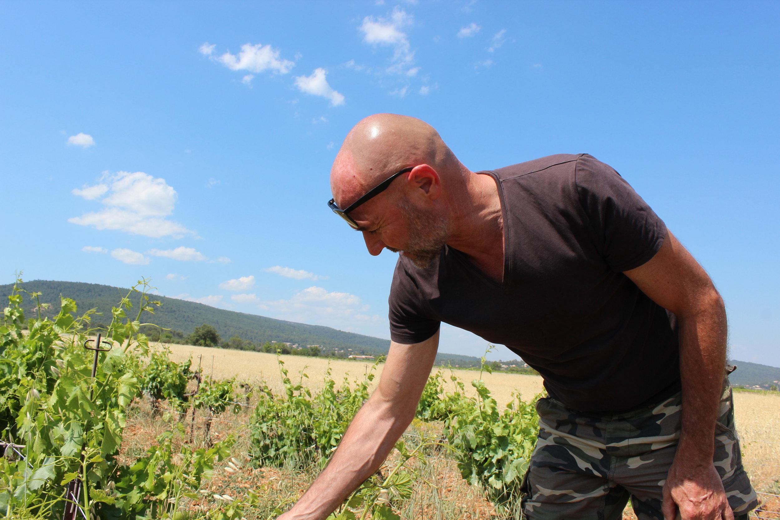 Le soin aux vignes et au sol, toujours…