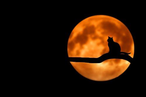 hpn cat.jpg