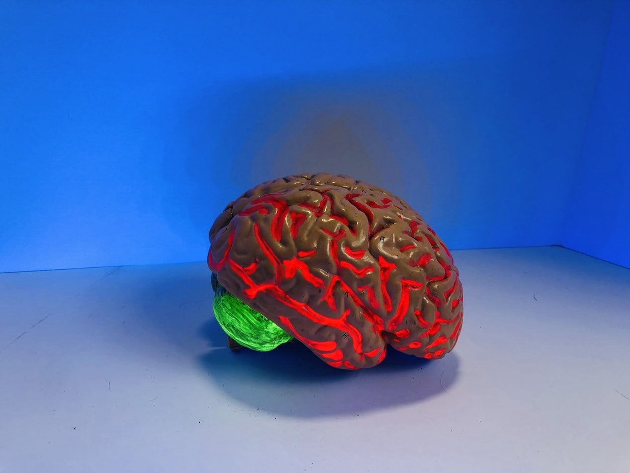 hpn brein2.jpg