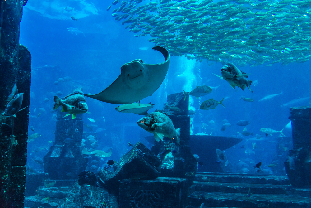 Akvariet på Atlantis The Palm