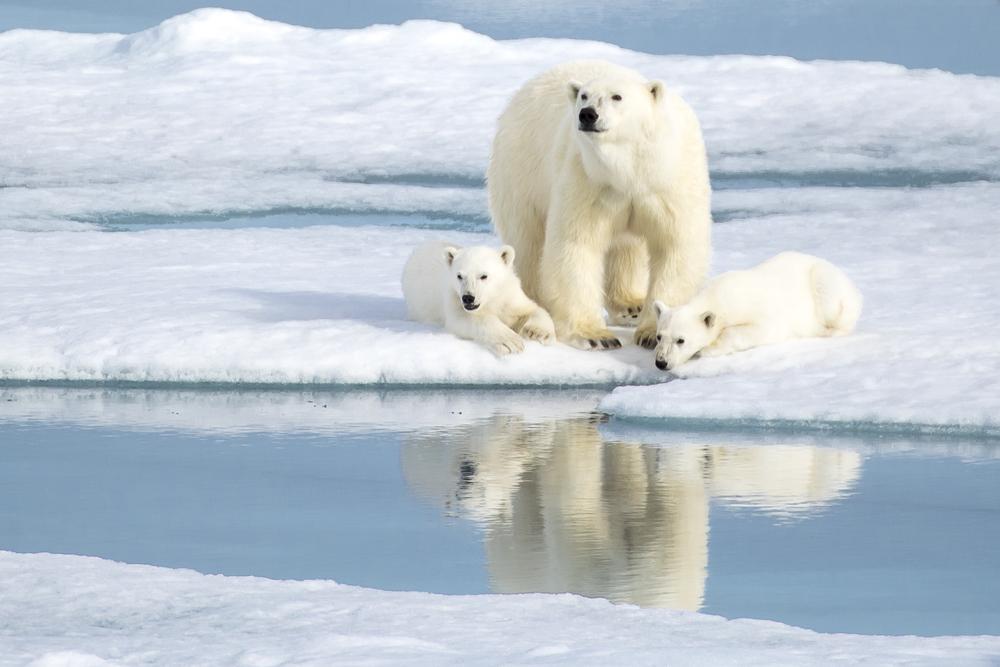 Svalbards mest kjente innbyggere