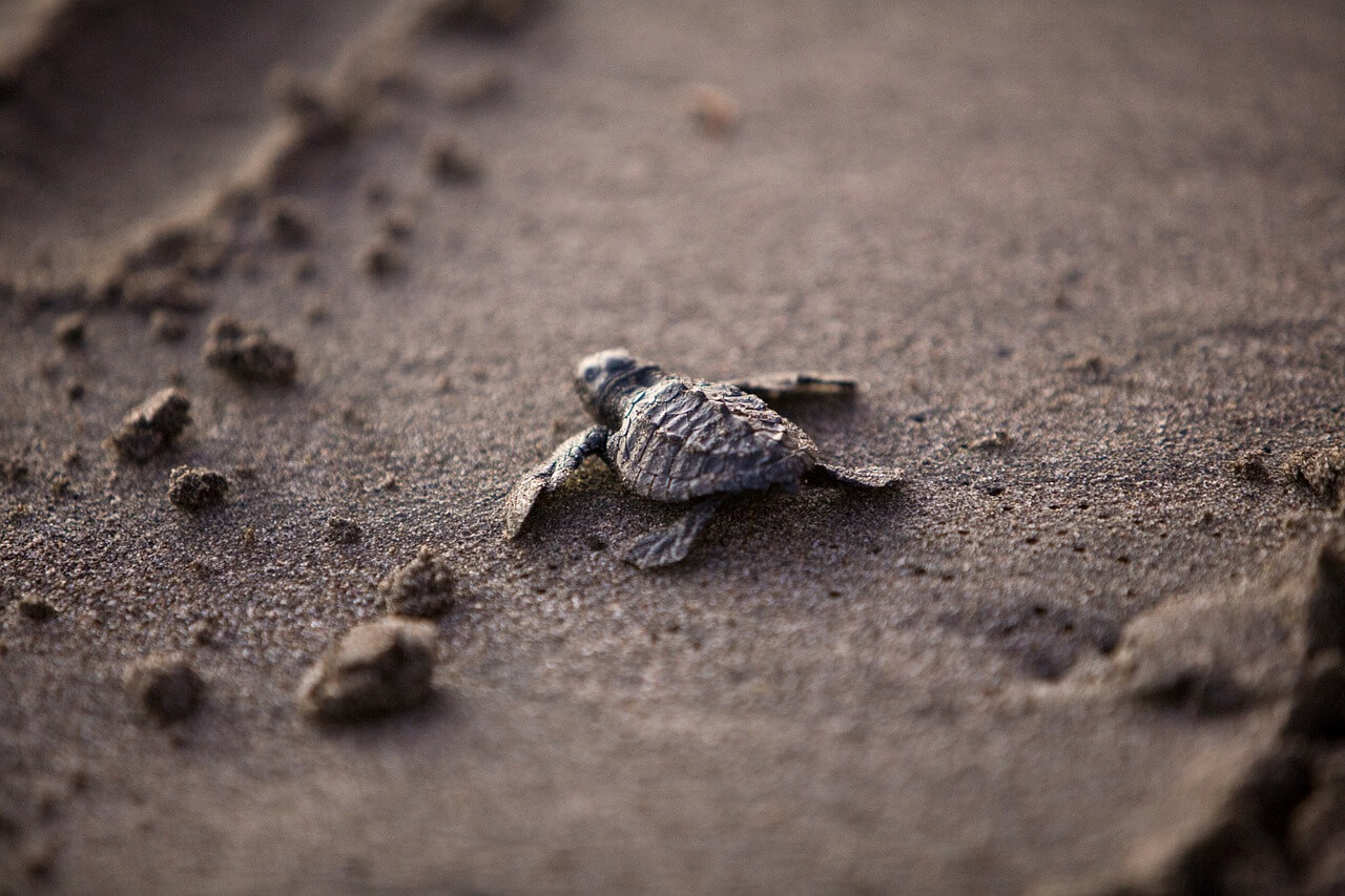 sea-turtle-356125_1280.jpg