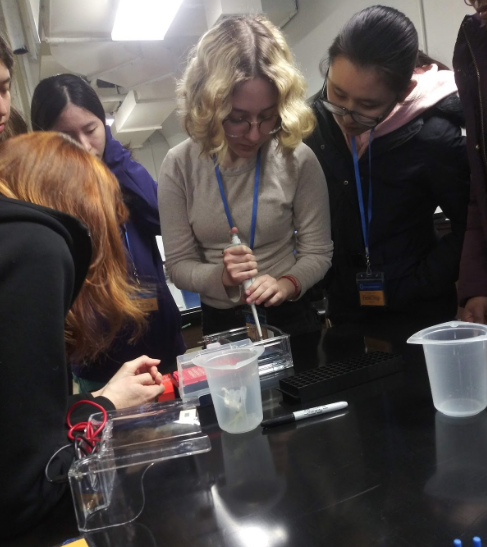 Students add their own DNA to the gel to perform gel electrophoresis.   Photo credit: Faezhan Choudhary