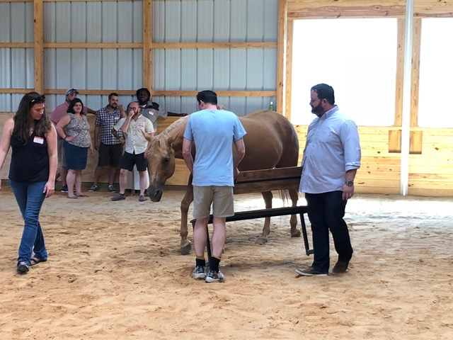 Equine Growth and Learning Experiences