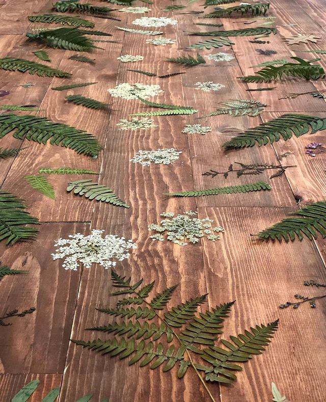 Do you have a favorite fern? Learn how to press them to make your own custom piece of art! Our Framed Pressed Ferns class is coming up next Sunday, September 1st. Get your tickets now through the link in our bio.  #seattle #seattlewa #theworksseattle #seattlemakers #seattlemaker #makerseattle #seattlelocal #seattlelocalbusiness #shoplocalseattle #seattlebusiness #seattlesmallbusiness #seattlelifestyle #ferns #fernart