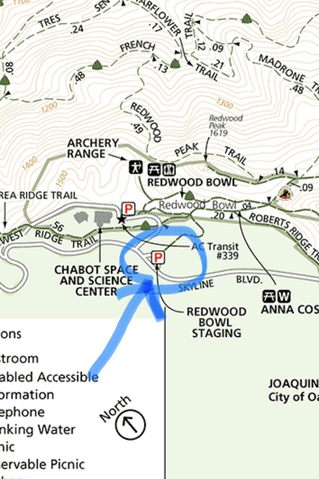 Ecotherapy Location #1  - Redwood Regional Park - Redwood Bowl Staging AreaFern Ravine Trail, Oakland, CA 94611