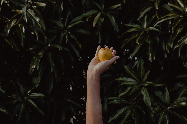 apple-apple-tree-color-1165509.jpg
