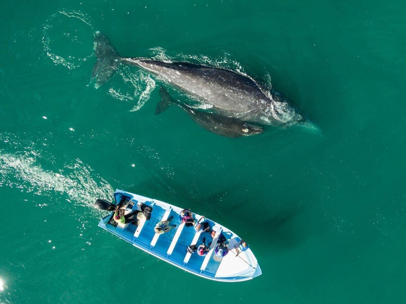 Women+in+Baja+beside+Whale+mom+and+baby.jpg