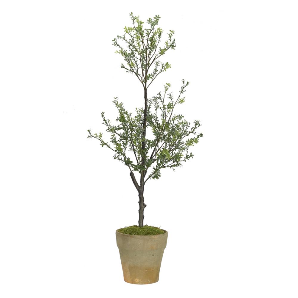 Boxwood Topiary $258