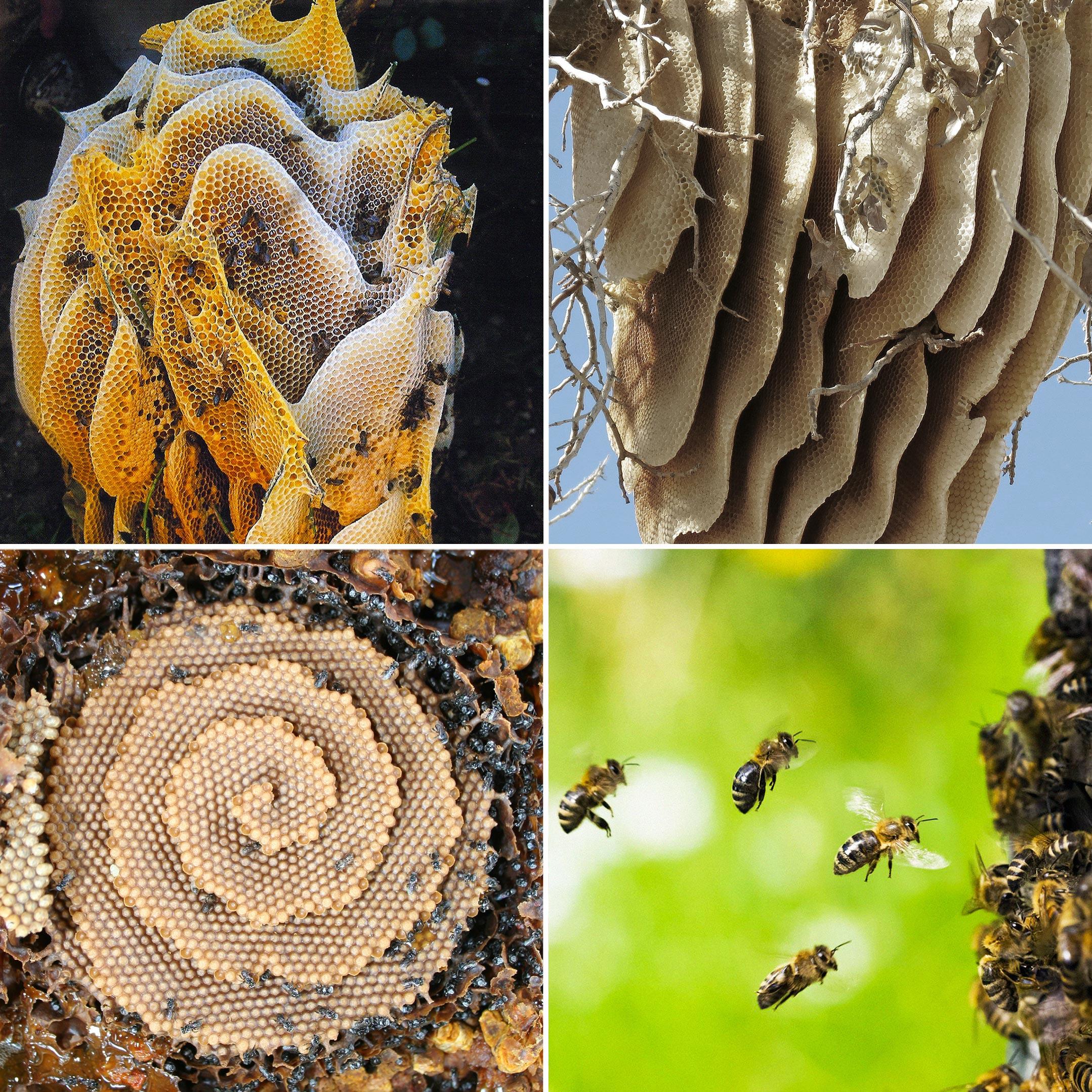 Bee_6c.jpg