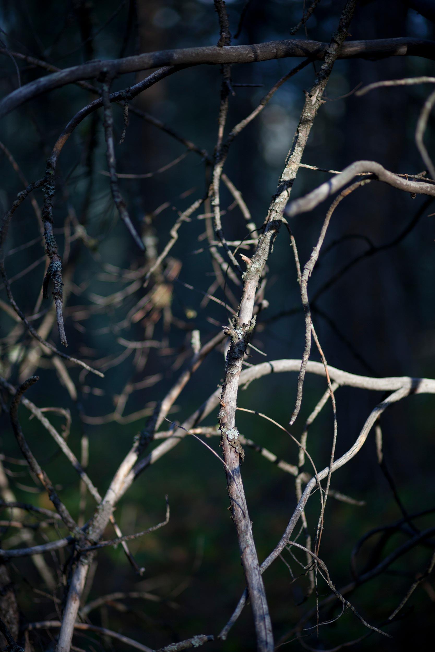Birnbaum_YearoftheForest_13.jpg