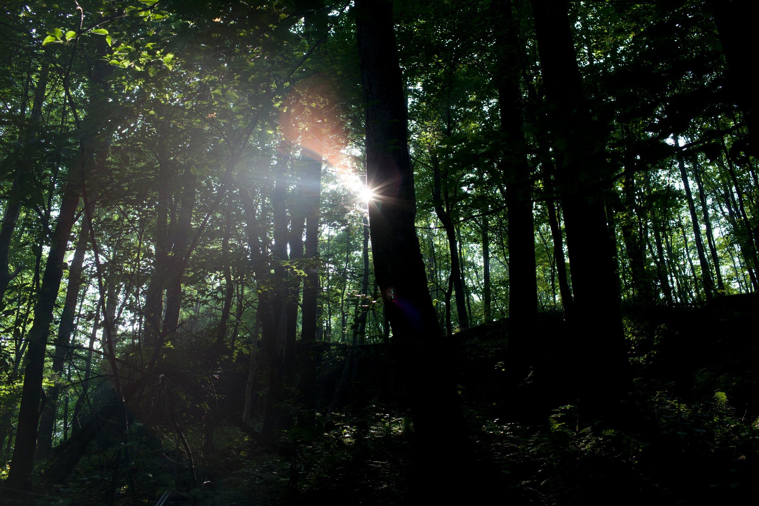 Birnbaum_YearoftheForest_22.jpg