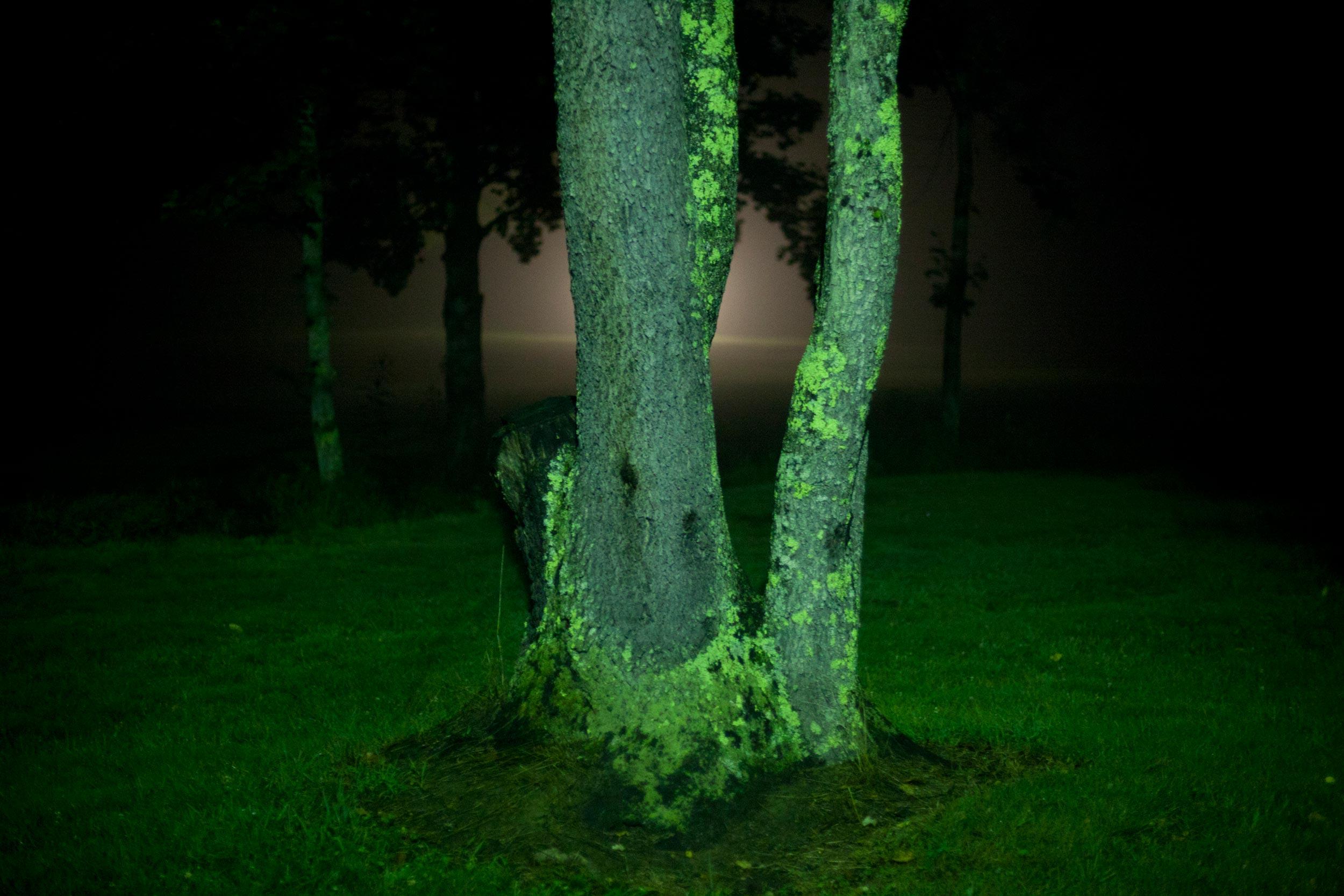 Birnbaum_YearoftheForest_56.jpg