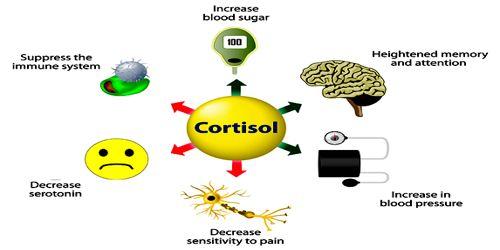 Cortisol-0.jpg