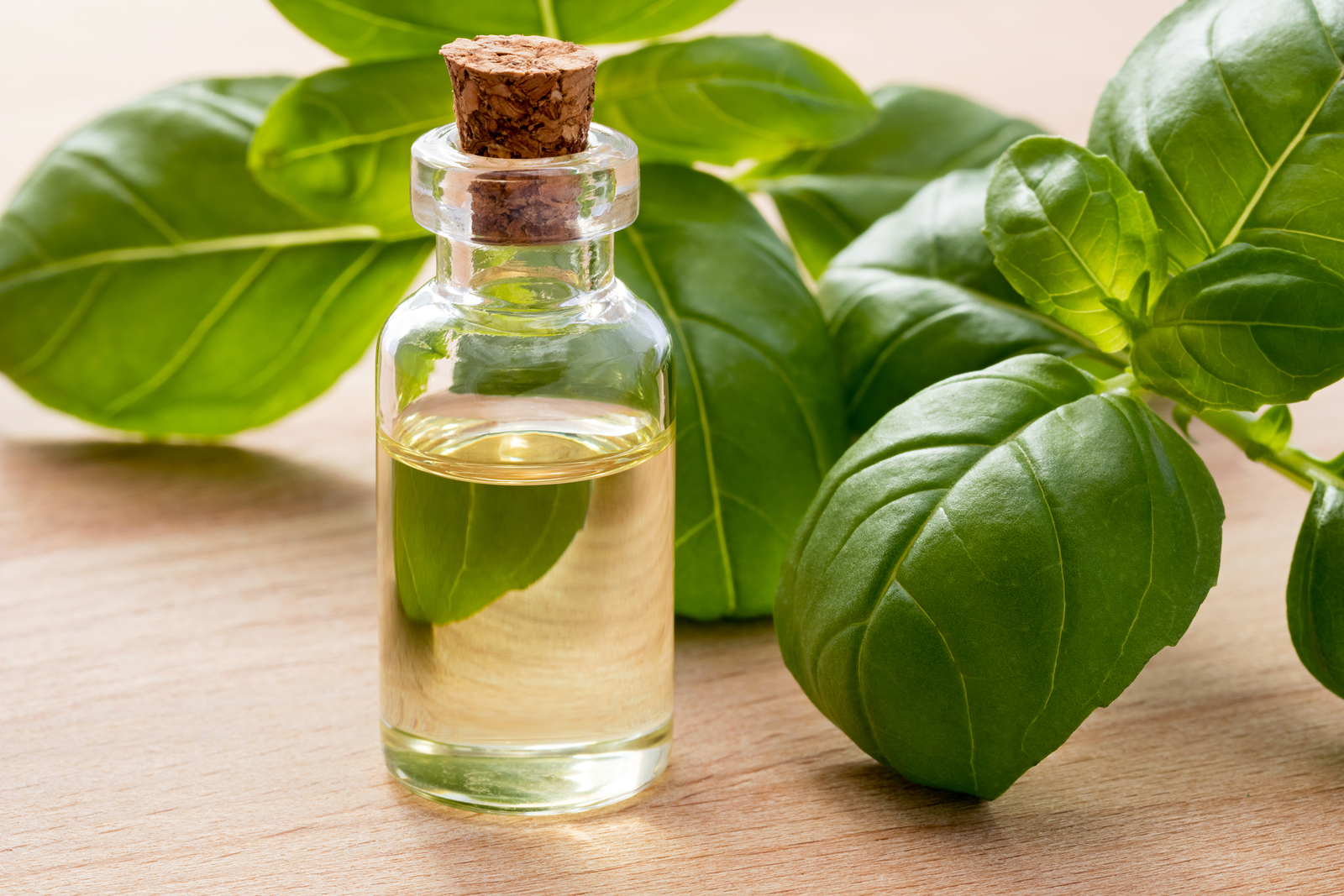 bigstock-A-Bottle-Of-Basil-Essential-Oi-228146494.jpg