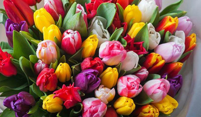 Tulips-600x350.jpg