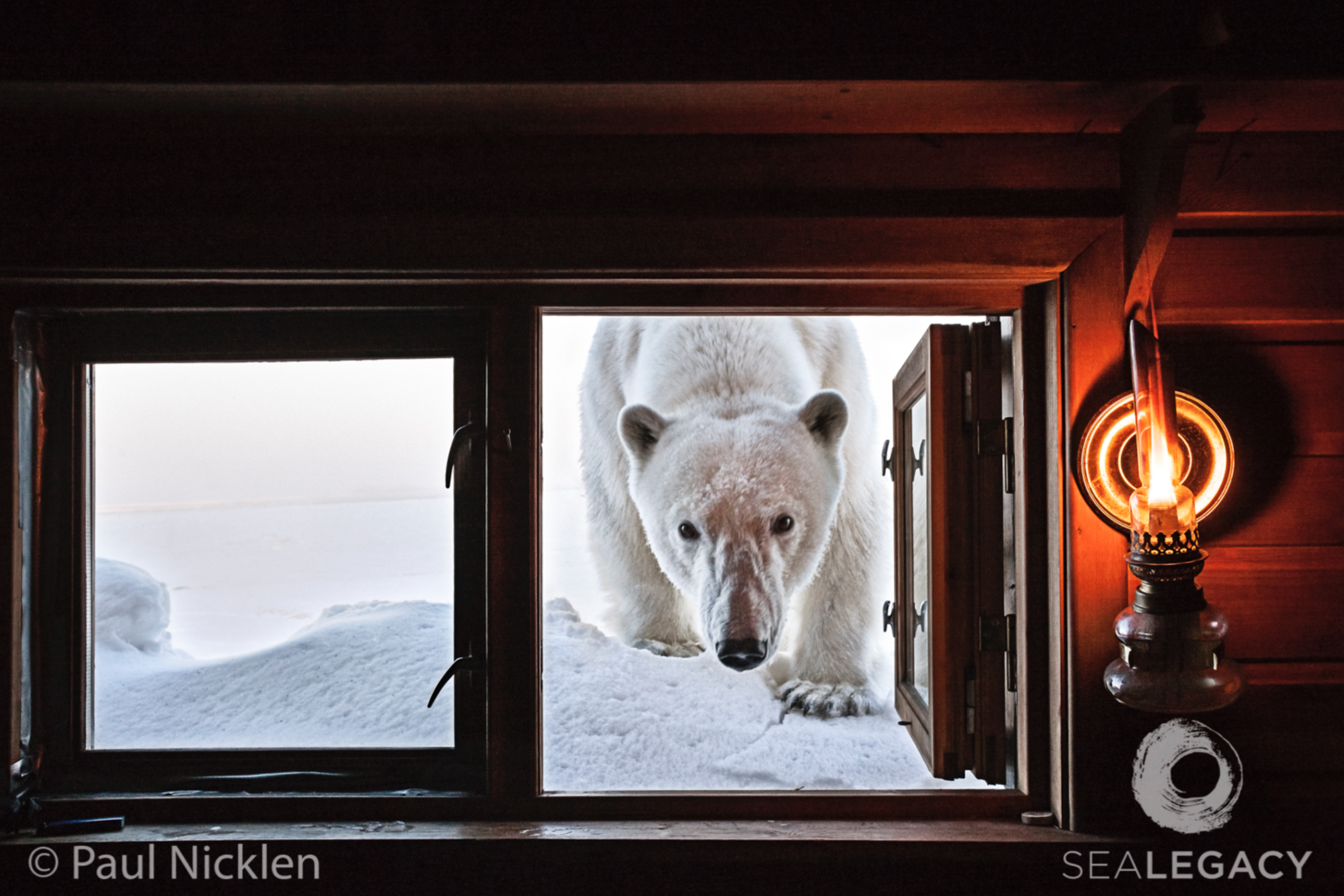 Paul Nicklen, Shackleton's Cottage, SOLD  Digital Chromogenic Print, 20x30 in.