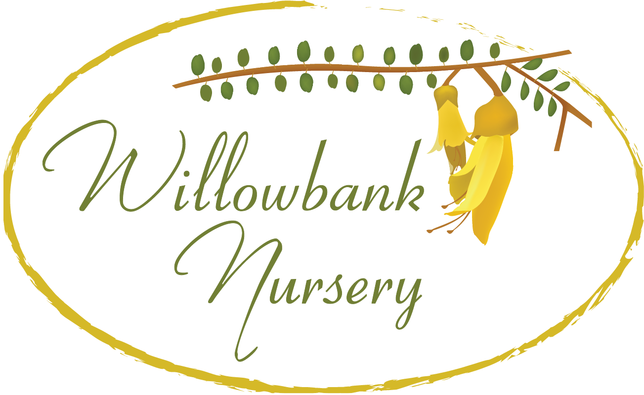 Willowbank Logo Final.png
