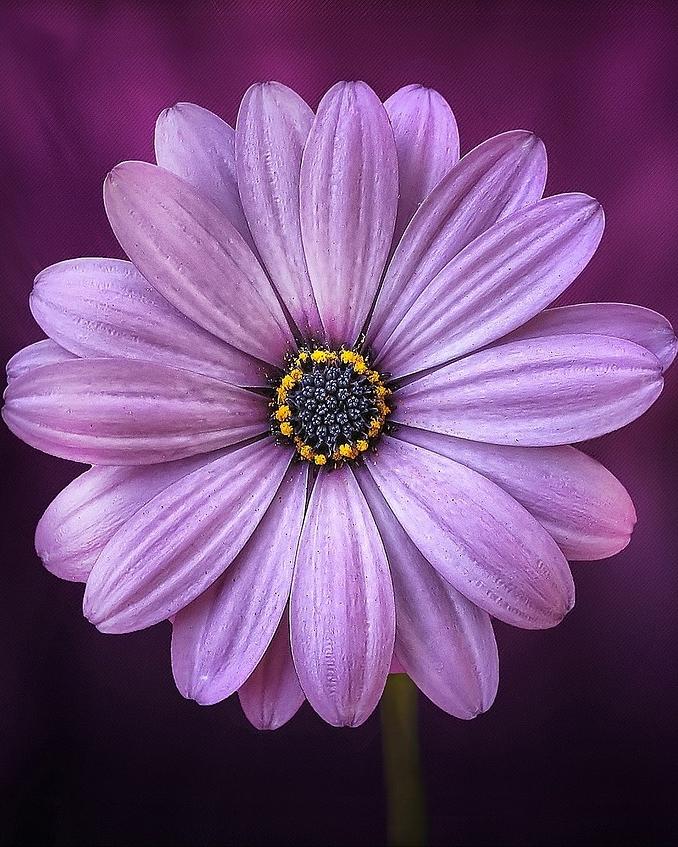 flower-729512_1280.jpg