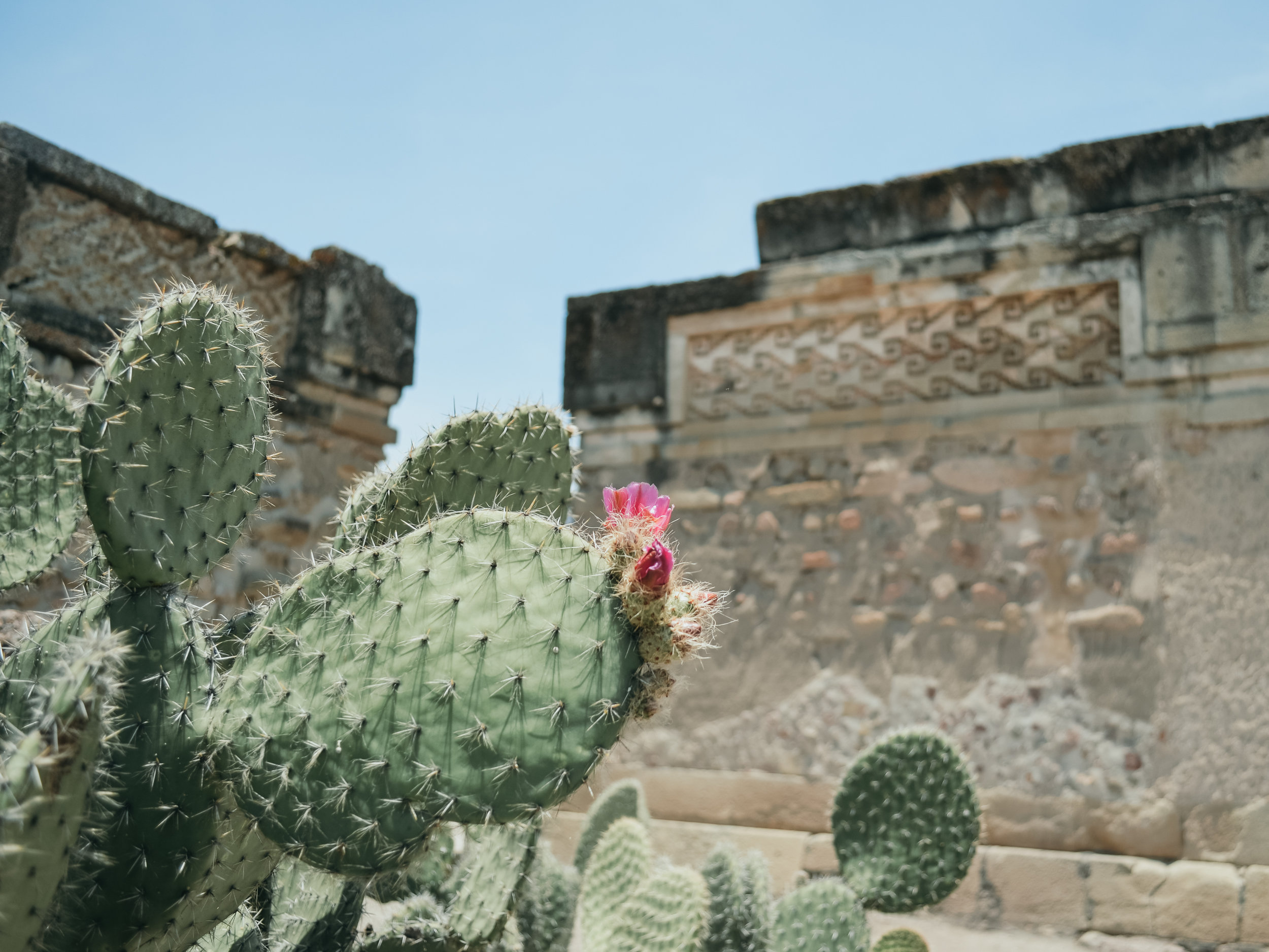 Oaxaca, mexico -