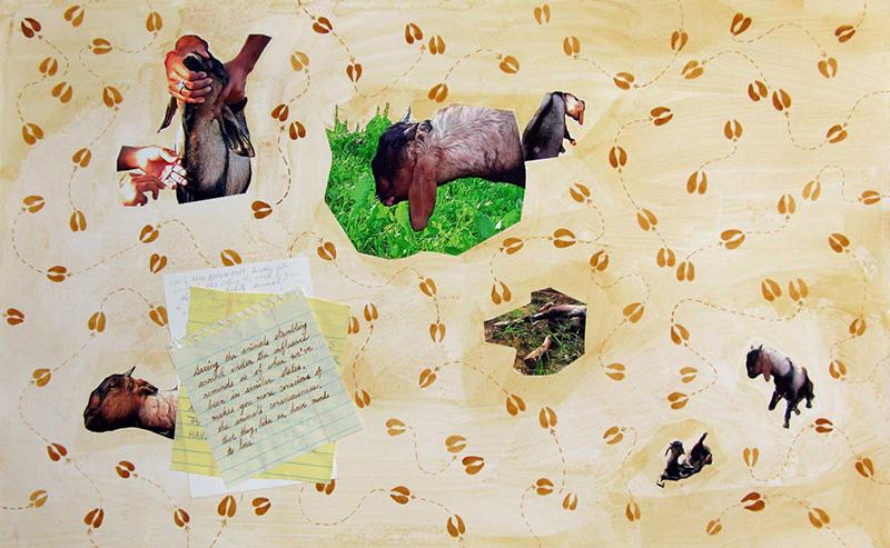 Anesthetizing Brown Goat (Seeing the animals stumbling…)