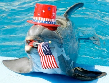 Another Dolphin Wearing a Hat