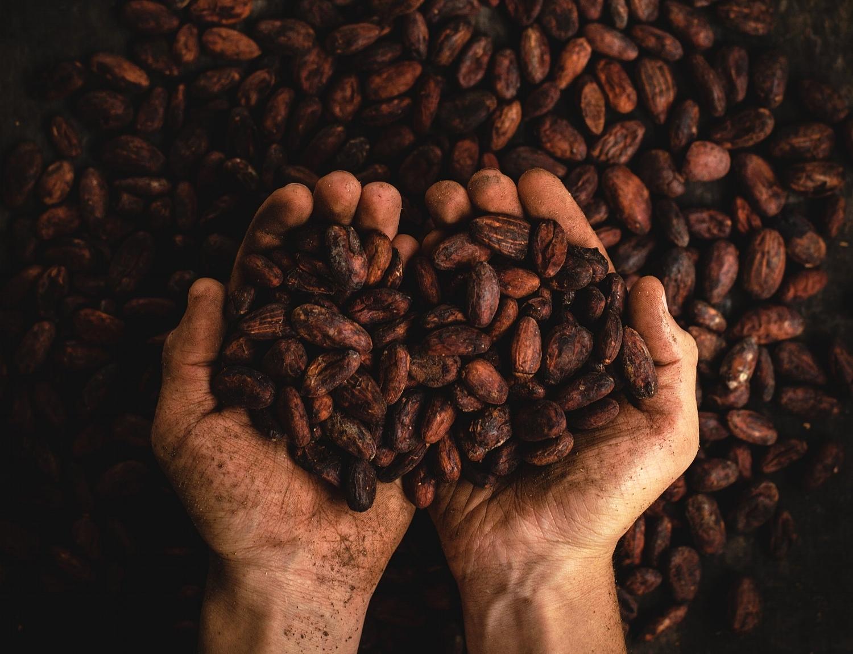 Hvad er Ceremoniel Kakao? Find svar på dine spørgsmål om Kakao her