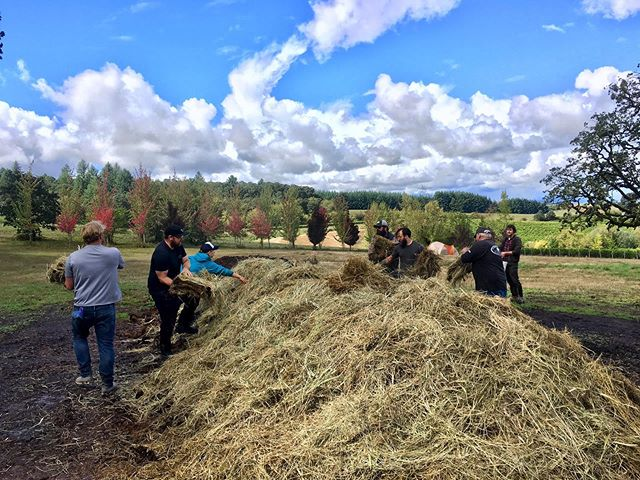🎶We get by with a little help from our friends..🎶 Getting our BD compost piles that will overwinter covered up with the help of some of our fruit buyers coming out to check their grapes💚