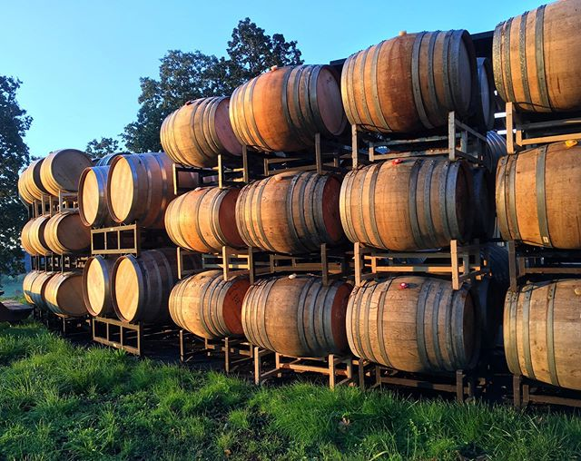 Empty barrels ready to be filled basking in the morning glow✨