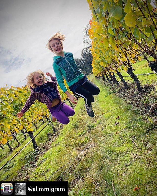 Repost from @alimmigram - Harvest is still well underway, but all the fruit is in - hooray! @johanvineyards #jumpforjoy . . . . . #johanvineyards#harvest#autumn#vineyards#biodynamic#biodynamicvineyards#biodynamicwine#winery#wine#instawine#vineyardlandscapes#naturallandscapes#scenery#light#oregonwines#oregonwineries#willamettevalley#wvwines#wvharvest2019#exploreoregon#oregonexplored#oregonwinecountry#orwinetravel#vineyardphotography#fall2019#oregonwine#grapes#pnw#siblings