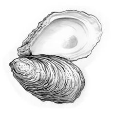 deb156dd56e1c41d22858bebefc78864--monday-tuesday-oyster-shells.jpg