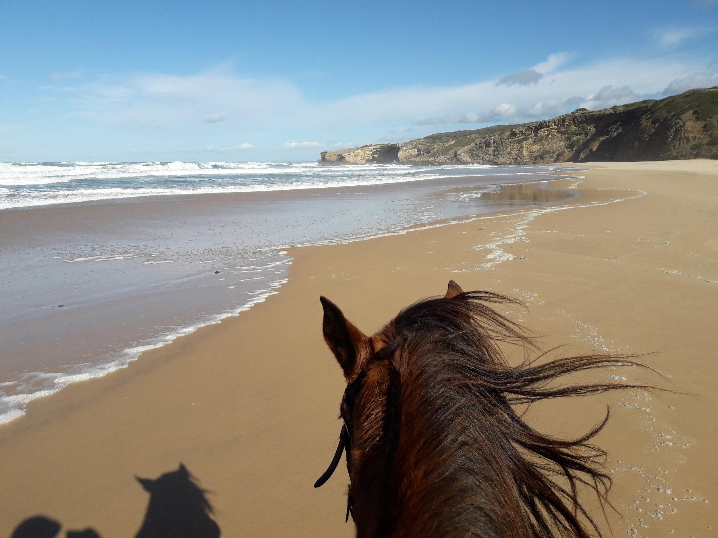 Pferd-Strand-Meer-Wellen-Küste-Monte Clerigo.jpg
