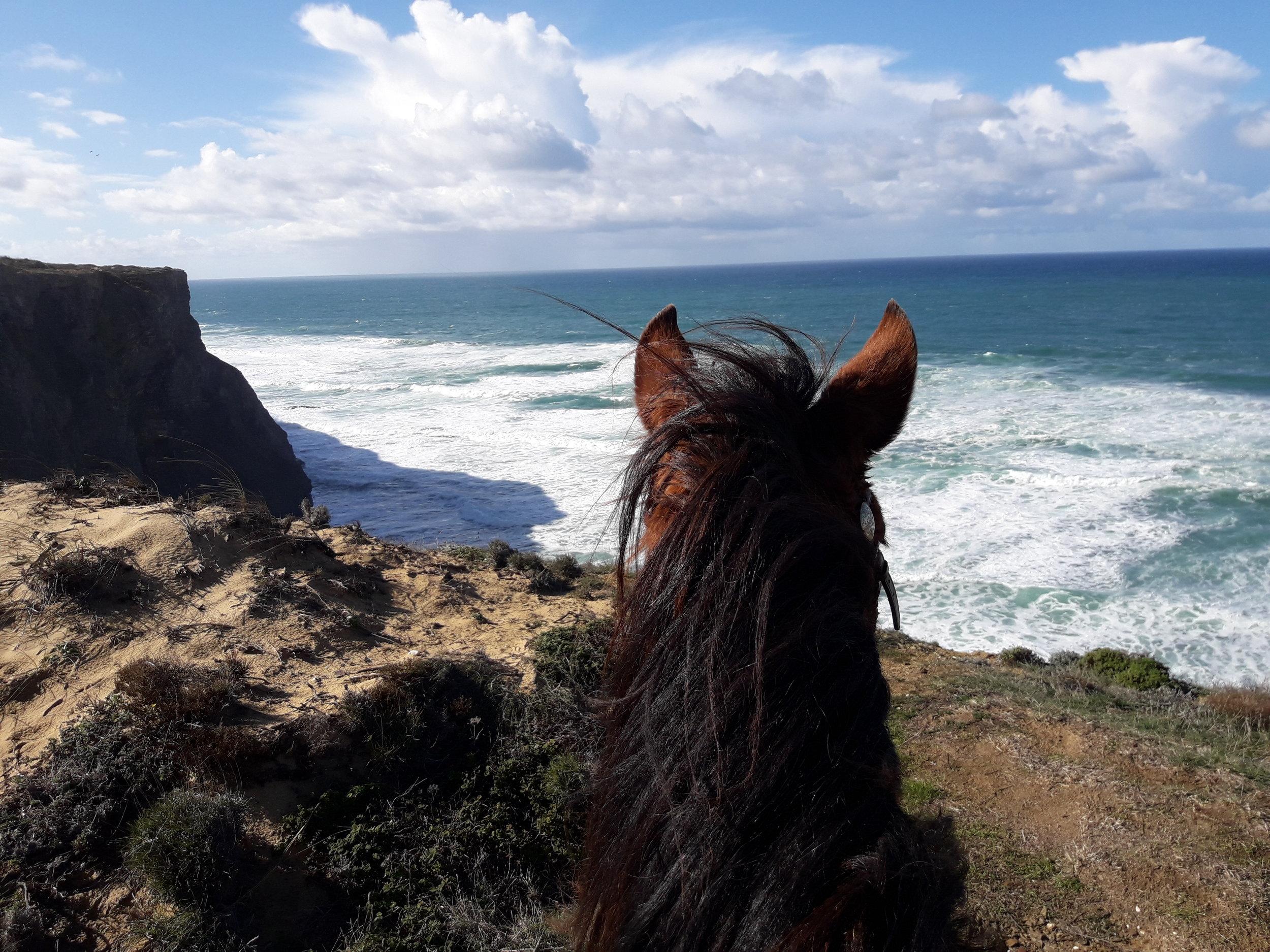 Pferd-Klippen-Meer.jpg